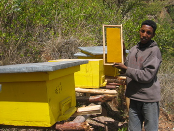 Mekuria Gizaw, coordinator of youth bee-keeping enterprise, shows his bee hives