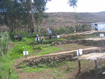 Seedling station at Metkoria with villagers who run it
